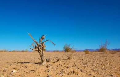 Climate Change - May Declared Hottest Month