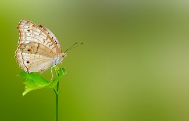 Macro Photography - How to Combine Images for Sharp Photos