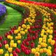 Photography - How to Take Great Photos of Gardens and Flowers
